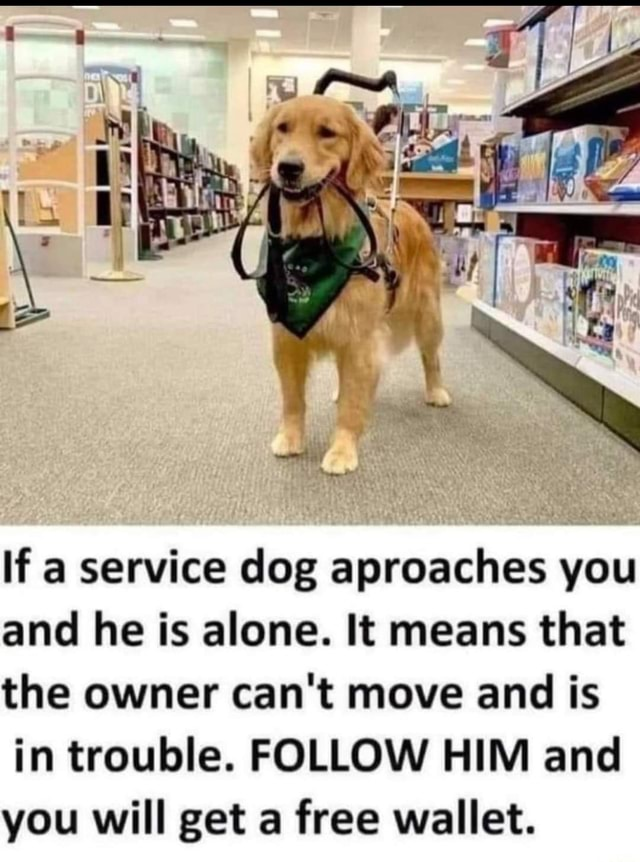If a service dog aproaches you and he is alone. It means that the owner can not move and is in trouble. FOLLOW HIM and you will get a free wallet memes