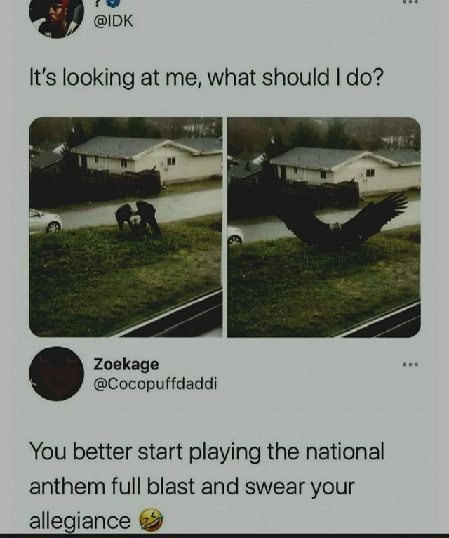 Ap on It's looking at me, what should I do You better start playing the national anthem full blast and swear your allegiance meme
