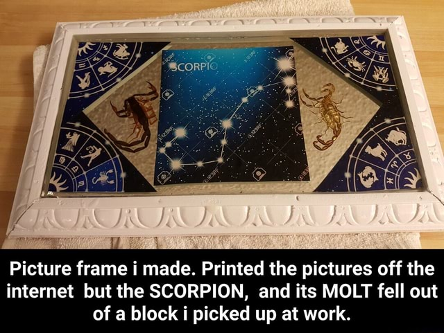 Picture frame i made. Printed the pictures off the internet but the SCORPION, and its MOLT fell out of a block picked up at work.  Picture frame i made. Printed the pictures off the internet but the SCORPION, and its MOLT fell out of a block i picked up at work memes