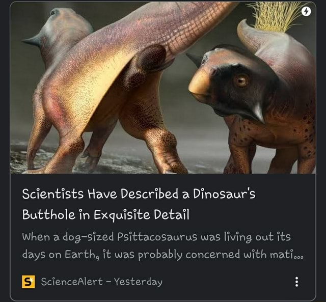 Scientists Have Described a Dinosaur's Butthole in Exquisite Detail When a dog sized Psittacosaurus was living out its days on Earth, it was probably concerned with matiooo ScienceAlert  Yesterday meme