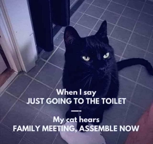 There is a lot to discuss When say JUST GOING TO THE TOILET cat hears FAMILY MEET ASSEMBLE NOW memes