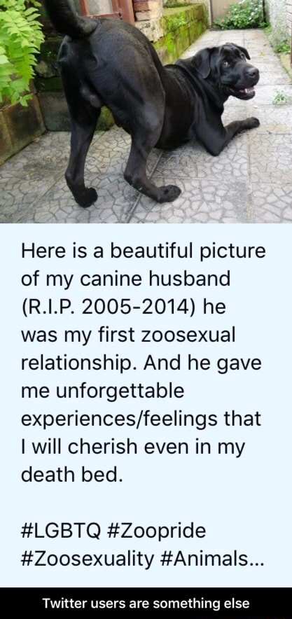 Here is a beautiful picture of my canine husband R.I.P. 2005 2014 he was my first zoosexual relationship. And he gave me unforgettable that I will cherish even in my death bed. LGBTQ Zoopride Zoosexuality Animals Twitter users are something else Twitter users are something else meme