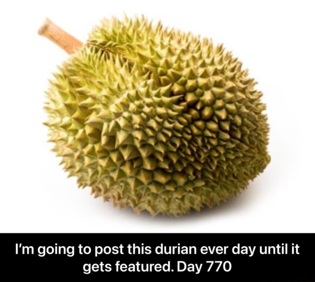 I'm going to post this durian ever day until it gets featured. Day 770  I'm going to post this durian ever day until it gets featured. Day 770 meme