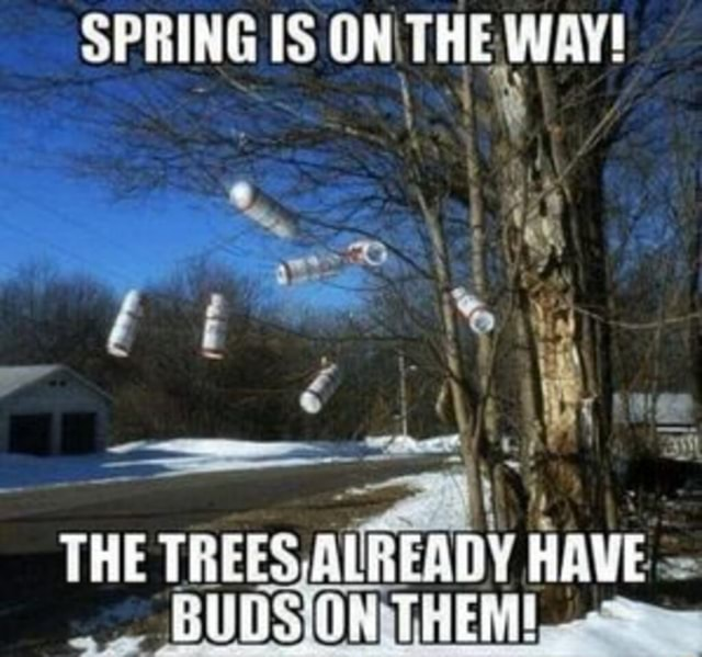 SPRING IS THE WAY THE TREES ALREADY BUDSIO memes