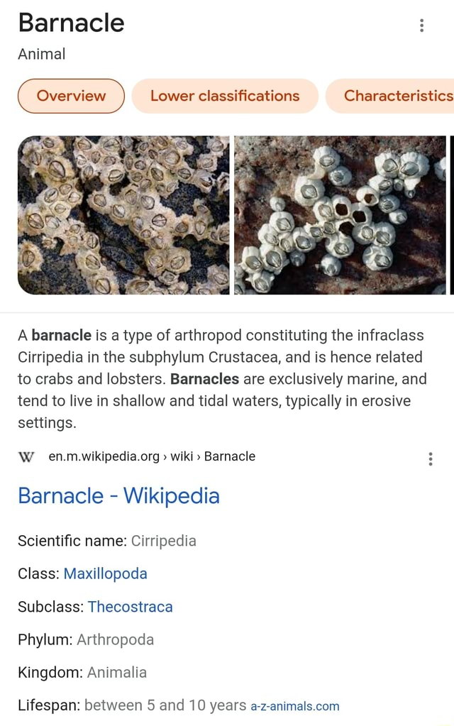 Barnacle Animal Overview Lower classifications Characteristics A barnacle is a type of arthropod constituting the infraclass Cirripedia in the subphylum Crustacea, and is hence related to crabs and lobsters. Barnacles are exclusively marine, and tend to live in shallow and tidal waters, typically in erosive settings. WWW wiki  Barnacle Barnacle  Wikipedia Scientific name Cirripedia Class Maxillopoda Subclass Thecostraca Phylum Arthropoda Kingdom Animalia Lifespan between 5 and 10 years meme