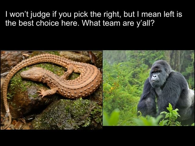 I won't judge if you pick the right, but I mean left is the best choice here. What team are y'all memes