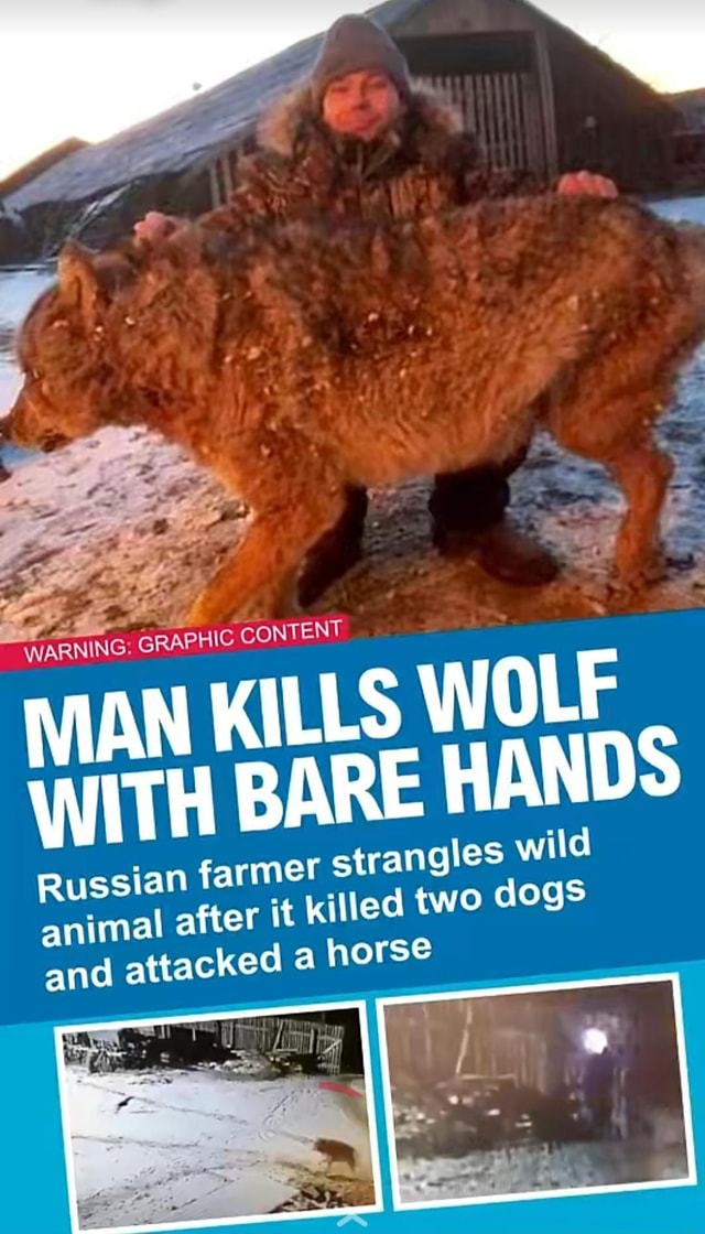 WARNING GRAPHIC CONTENT MAN KILLS WOLF WITH BARE HANDS mer strangles wild t killed two dogs a horse Russian far animal after and attacked memes