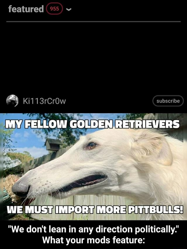 Featured Ki113rCrOw subscribe MY FELLOW GOLDEN RETRIEVERS WWE MUST IMPORT MORE PITTBULLS We do not lean in any direction politically What your mods feature We do not lean in any direction politically. What your mods feature memes