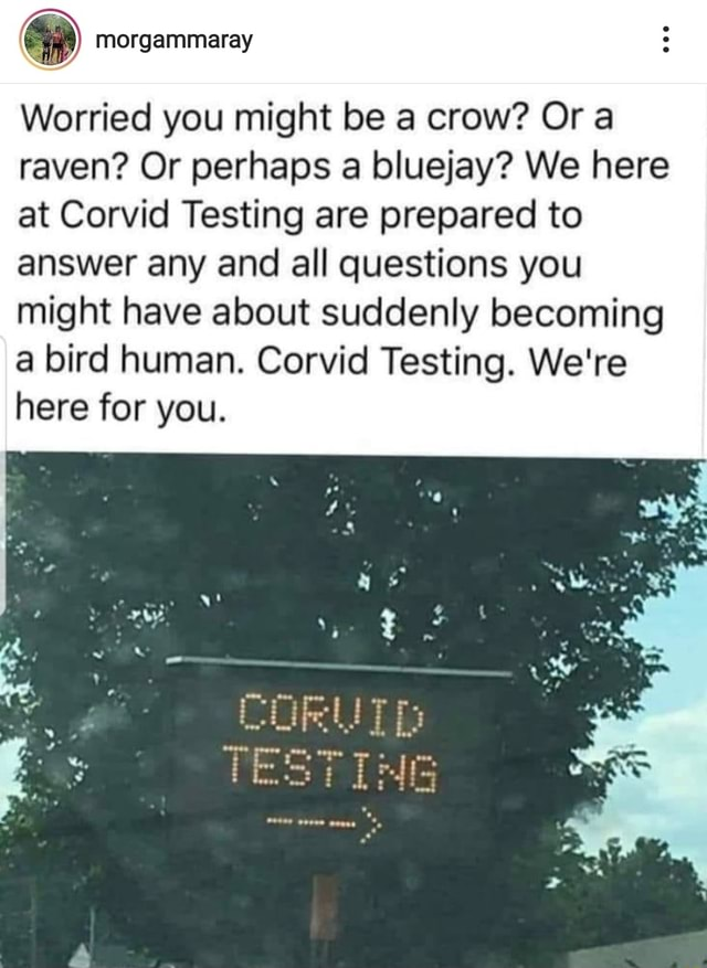 Worried you might be a crow Or raven Or perhaps a bluejay We here at Corvid Testing are prepared to answer any and all questions you might have about suddenly becoming a bird human. Corvicl Testing. We're here for you. TESTING meme