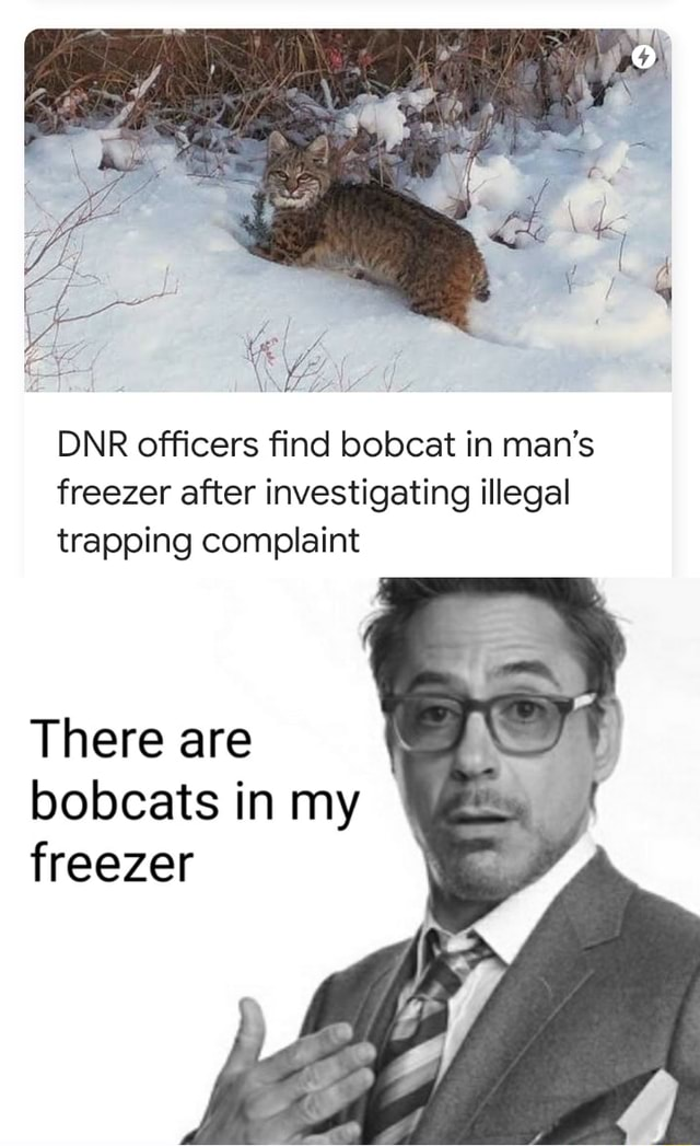 DNR officers find bobcat in man's freezer after investigating illegal trapping complaint There are bobcats in my freezer meme