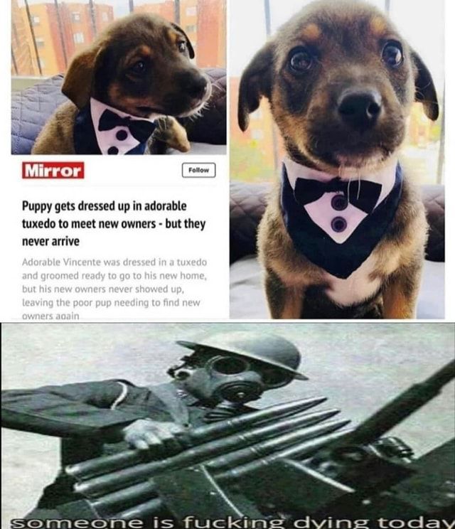 Puppy gets dressed up in adorable never arrive tuxedo to meet new owners  but they Adorable Vincente was dressed in tuxedo and groomed ready to goto his new home, eve shewed up, poor memes