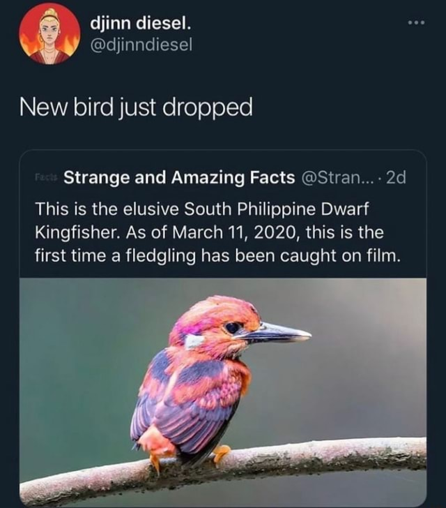 Djinn diesel. djinndiesel New bird just dropped Strange and Amazing Facts Stran  This is the elusive South Philippine Dwarf Kingfisher. As of March 11, 2020, this is the first time a fledgling has been caught on film. LEI memes