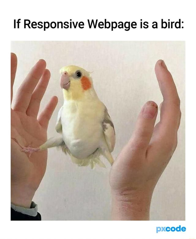 If Responsive Webpage is a bird code memes