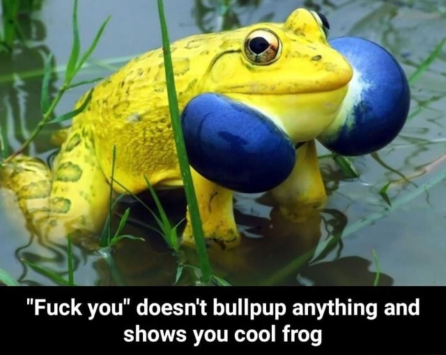 Fuck you doesn't bullpup anything and shows you cool frog  Fuck you doesn't bullpup anything and shows you cool frog meme