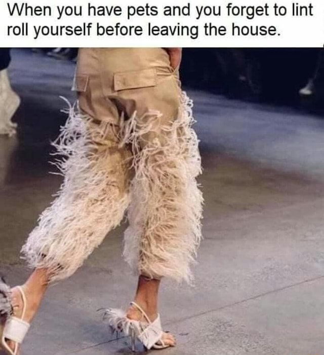 When you have pets and you forget to lint roll yourself before leaving the house meme