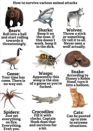How to survive various animal attacks Sharks Wolves Roll into andstart a ball Boopiton Throw astick or something. andstart rolling thenose,if or something. towardsit threateningly. work, boo} Or tellitto Never sit. seen work, boo} Never seen a in the dich wolf actually. Snake Your has Apparently this Wasps According to come.Thereis out, ,waspis the size Disney nowayout. of fucked. youre inta balloon. set Spiders everythin Crocodiles clocks.Captain Cats fust set Fill it with Can be punted everything elocks, Hook Captain up toz0m Hook does that inextreme Everything, and survives for Even youe abit memes