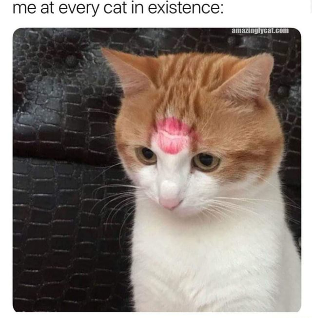 Me at every cat in existence com memes