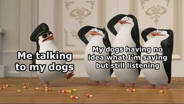 My dogs having no Me talking idea what I'm saying to my dogs but still listening as meme