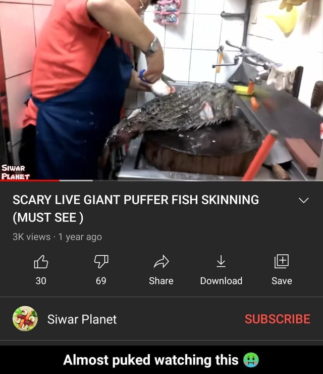 SCARY LIVE GIANT PUFFER FISH SKINNING MUST SEE  Siwar views  1 year ago 30 69 Share Download Save Siwar Planet SUBSCRIBE Almost puked watching this  Almost puked watching this  memes