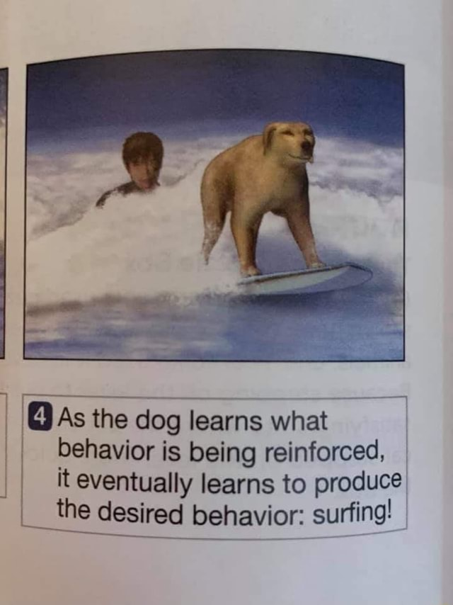 As the dog learns what behavior is being reinforced, it eventually learns to produce the desired behavior surfing memes