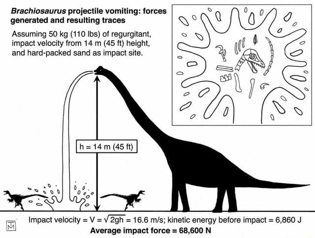 Brachiosaurus projectile vomiting forces generated and resulting traces Assuming SO kg 110 lbs of regurgitant, impact velocity from 14 m 45 ft height, and hard packed sand as impact site. he 14 45 ft Impact velocity V af 16.6 mils kinetic energy before impact 6,860 J Average impact force 68,600 N meme