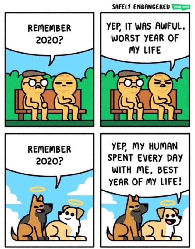 SAFELY ENDANGERED REMEMBER YEP IT WAS AWFUL. 2020 WORST YEAR OF My LIFE II REMEMBER YER My HUMAN 2020 SPENT EVERY DAY WITH ME. BEST YEAR OF my LIFE memes