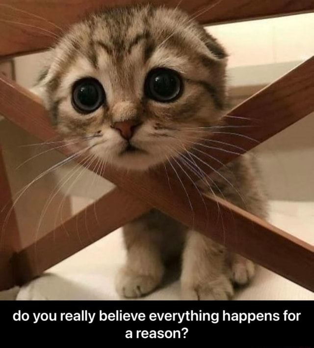 Do you really believe everything happens for a reason do you really believe everything happens for a reason memes