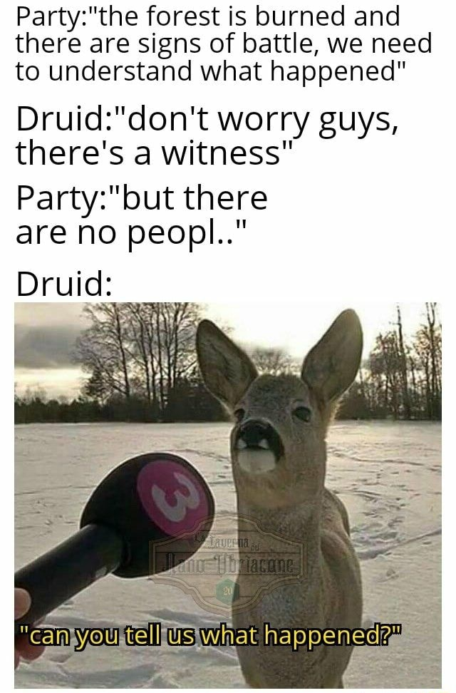 Forest is burned and there are signs of battle, we need to understand what happened worry guys, there's a witness there are no peopl Druid memes