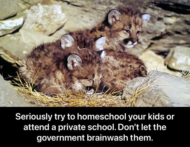 Seriously try to homeschool your kids or attend a private school. Do not let the government brainwash them. Seriously try to homeschool your kids or attend a private school. Do not let the government brainwash them memes