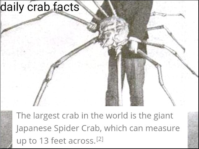 The largest crab in the world is the giant Japanese Spider Crab, which can measure up to 13 feet across memes