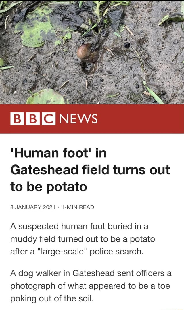 BIBI NEws Human foot in Gateshead field turns out to be potato 8 JANUARY 2021 1 MIN READ A suspected human foot buried ina muddy field turned out to be a potato after a large scale police search. A dog walker in Gateshead sent officers a photograph of what appeared to be a toe poking out of the soil memes