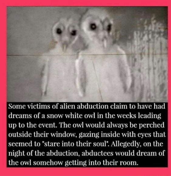 Some victims of alien abduction claim to have had dreams of a snow white owl in the weeks leading up to the event. The owl would always be perched outside their window, gazing inside with eyes that seemed to stare into their soul'. Allegedly, on the night of the abduction, abductees would dream of the owl somehow getting into their room memes