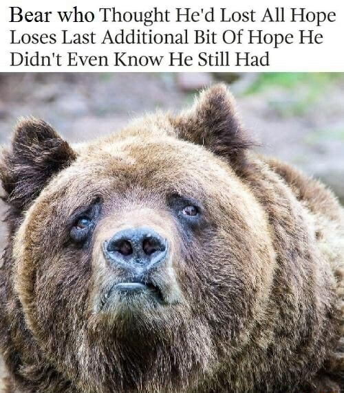 Bear who Thought He'd Lost All Hope Loses Last Additional Bit Of Hope He ww. Didn't Even Know He Still Had memes