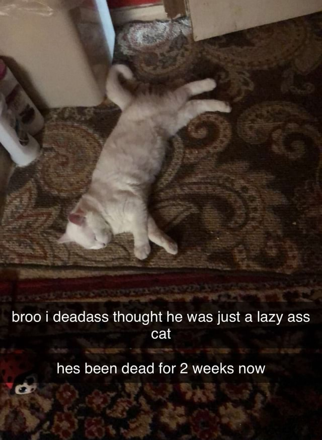 Broo i deadass thought he was just a lazy ass cat hes been dead for weeks now meme