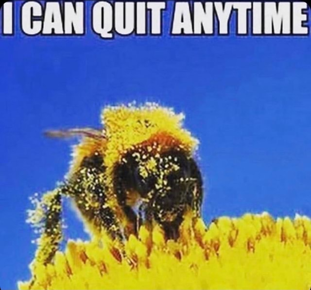 CAN QUIT ANYTIME fy meme