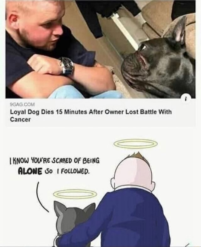 Loyal Dog Dies 15 Minutes After Owner Lost Battle With Cancer KNOW YOU'RE SCARED OF BEING ALONE So I FoLLOWED memes