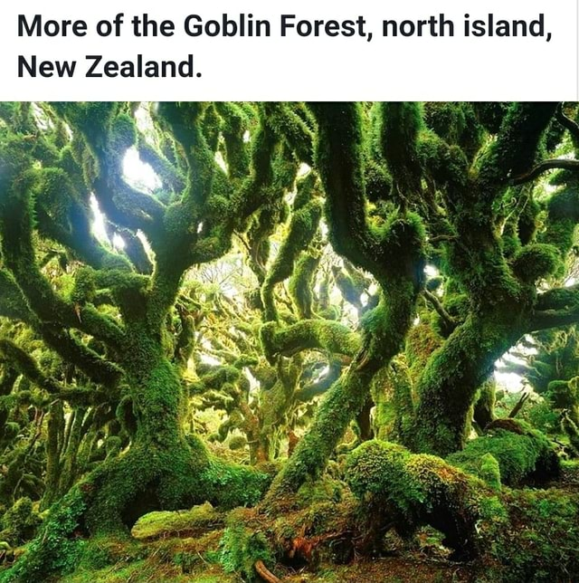 More of the Goblin Forest, north island, New Zealand meme