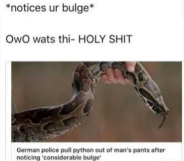 *notices ur bulge* wats thi HOLY SHIT German police pull python out of man's pants after noticing considerable bulge memes