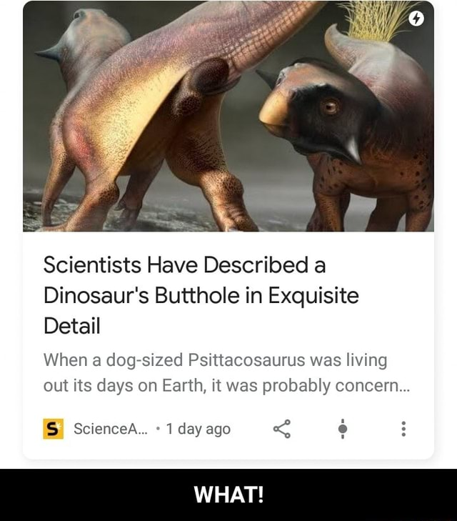 Scientists Have Described a Dinosaur's Butthole in Exquisite Detail When a dog sized Psittacosaurus was living out its days on Earth, it was probably concern ScienceA 1 day ago WHAT  WHAT memes