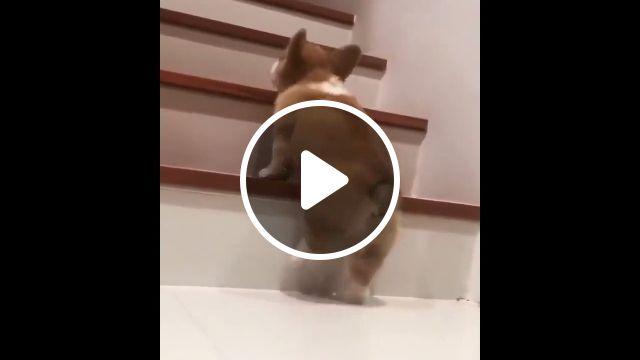 Short legs lovely, dog, puppy, pet, led, lovely