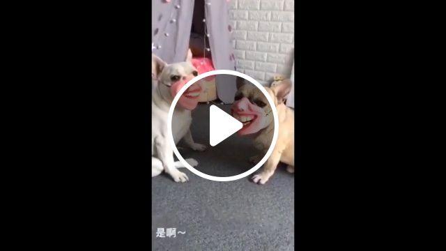 Laugh for a beautiful life, dog, laugh, pet, cute, life