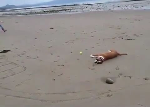 Tennis Ball Game With Mischievous Dog