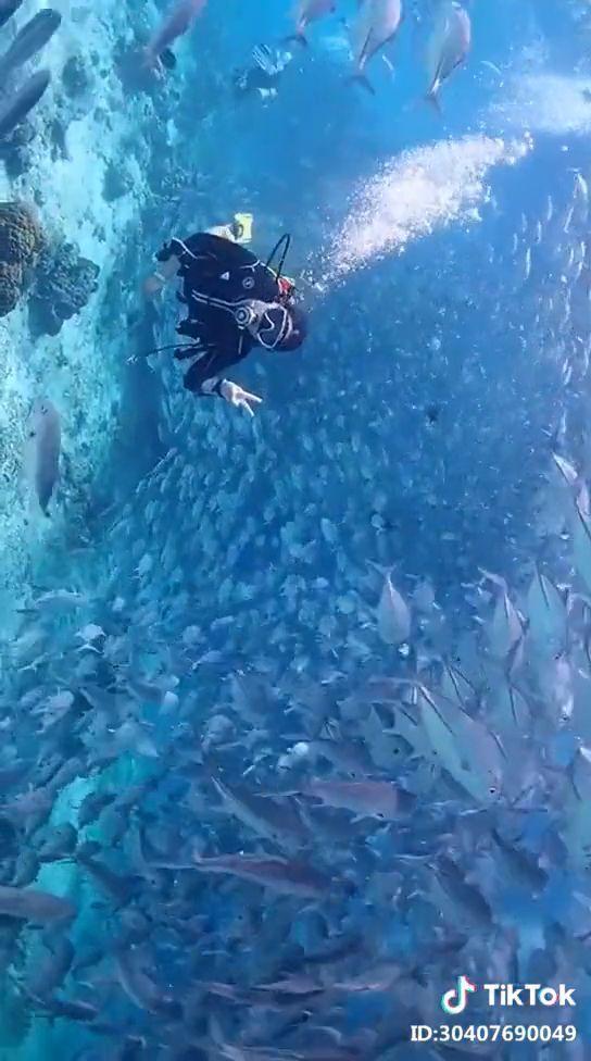Beautiful Diving Underwater