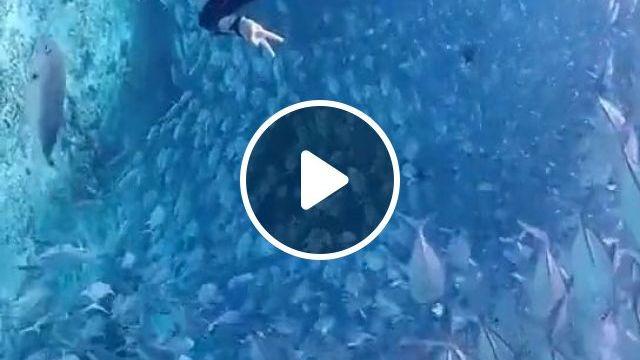 Beautiful Diving Underwater - Funny Videos - funvizeo.com - beautiful ocean, wild animal, travel