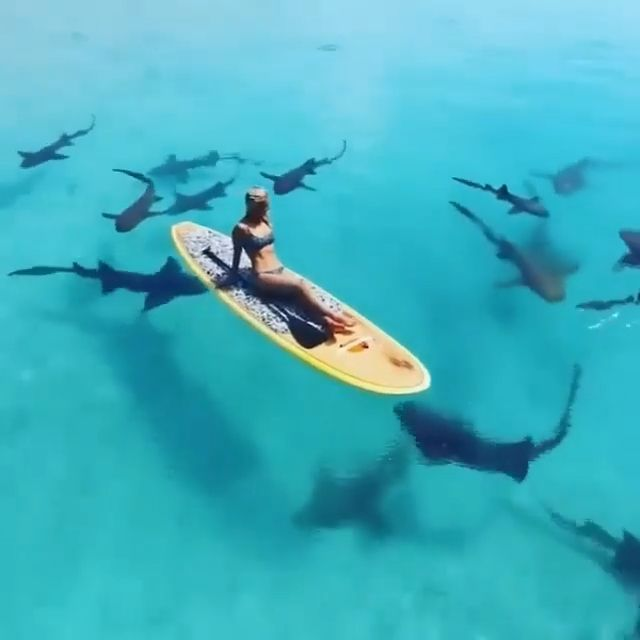 Paddle boarding with sharks
