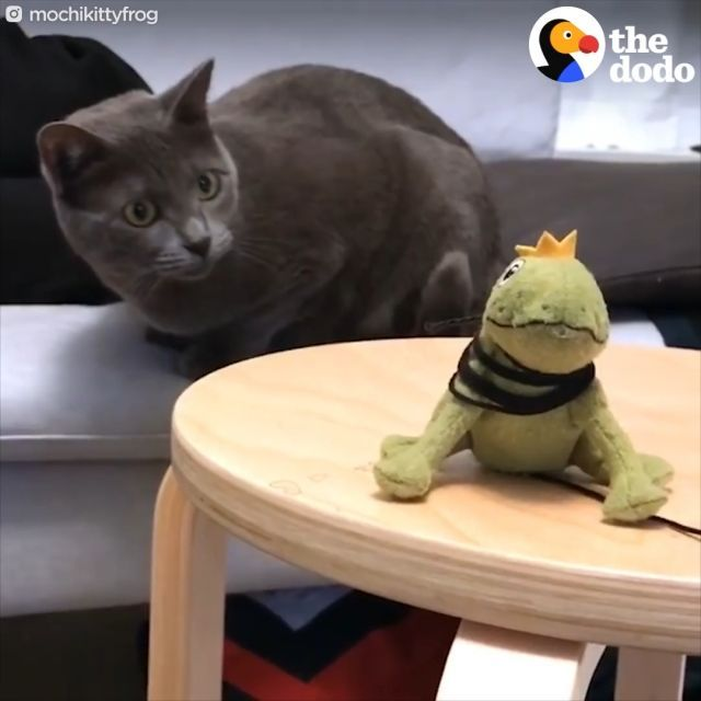 Mischievous cat and stuffed frog - Funny Videos - funvizeo.com - funny cat, funny pet, frog, stuffed frog,
