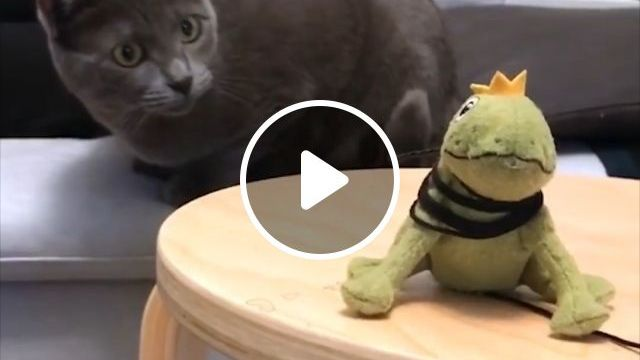 Mischievous cat and stuffed frog