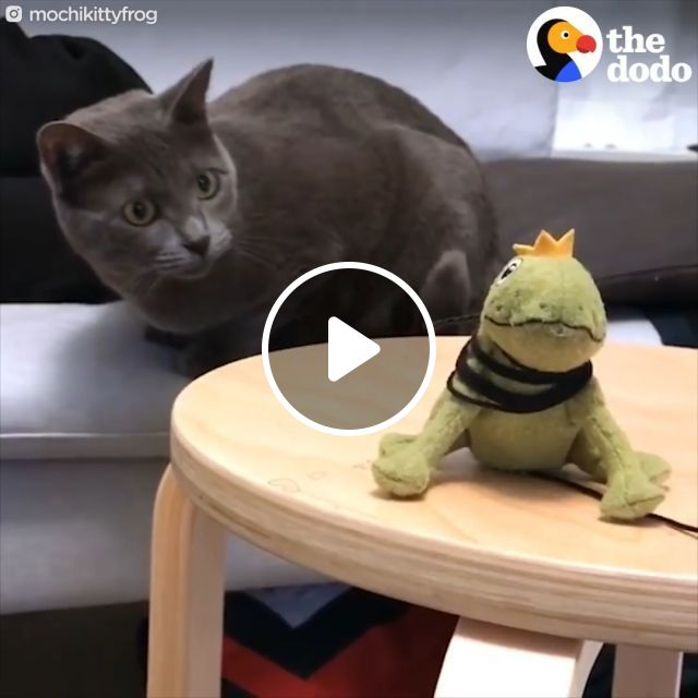 Mischievous cat and stuffed frog, funny cat, funny pet, frog, stuffed frog,