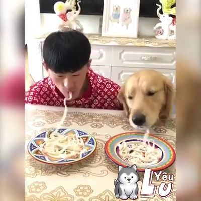 When you have very gluttonous dogs