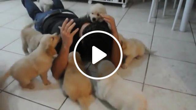 Mischievous puppies